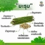 BANN CHA ชามะรุม บ้านชา ชาเพื่อสุขภาพ ลดน้ำหนัก จากมะรุมธรรมชาติแท้ 30ซอง thumbnail 3